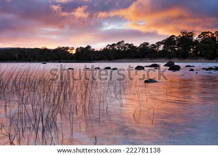 australia Tasmania St Clair lake sunrise red sunbeams illuminating eucalyptus woods surrounding lake - stock photo