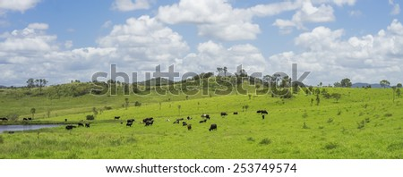 Australian Agriculture Beef Cattle Farming in Queensland with lush green pasture after good rain - stock photo