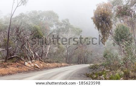 Australian bush track covered in mist - stock photo