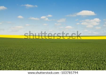 Australian Canola wheat fields - stock photo