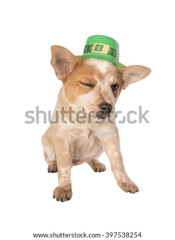 Australian cattle dog puppy winking with Saint Patrick's Day hat isolated on white