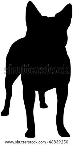 Australian Cattle Dog Silhouette - stock photo