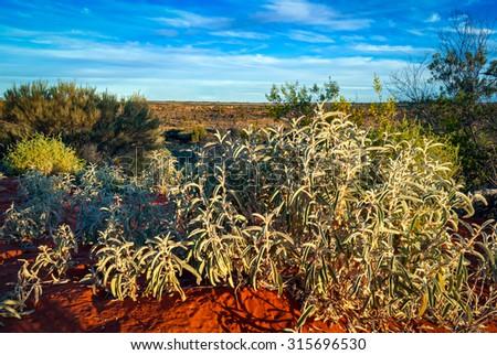 Australian desert (outback) in Northern Territory - stock photo