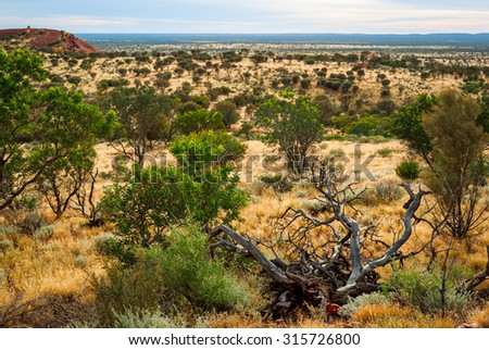 Australian desert (outback) in Northern Territory - stock photo
