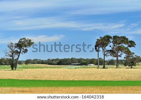 australian farmland with mown and baled hay - stock photo