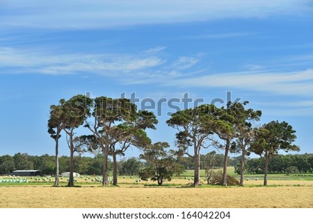 australian farmland with sheds, hay rolls, cattle and scattered gum trees - stock photo