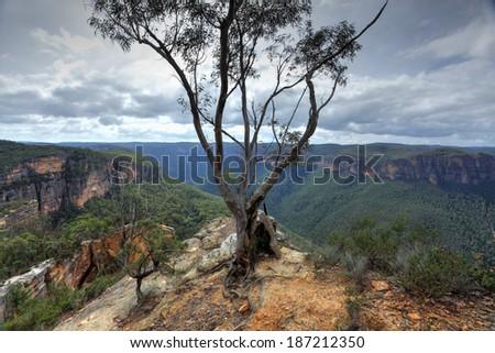 Australian gum tree stands tall on the edge of Burramoko Head, overlooking the Grose Valley, near Hanging Rock, NSW, Australia. - stock photo