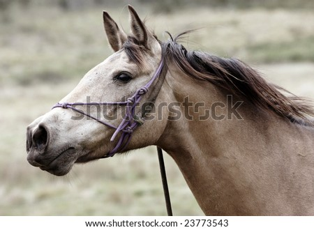 Australian Horse in the Bush while on a Horse Trek
