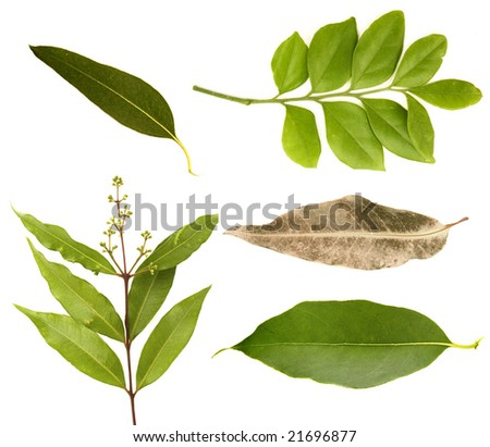 Australian leaf collection - stock photo