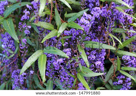 Native Plant Stock Images Royalty Free Images Amp Vectors