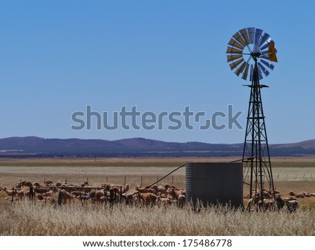 Australian sheep at a drinking place with a wind mill on the fields of the outback of South Australia - stock photo