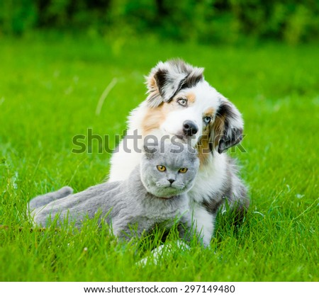 Australian shepherd puppy lying with a cat on the green grass - stock photo