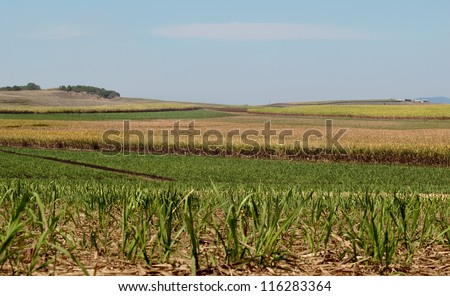 Australian sugar industry sugarcane farm rural agriculture landscape with smoky sky background - stock photo