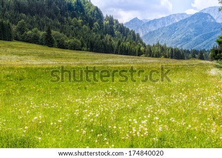 Austrian Meadow with mountains - stock photo