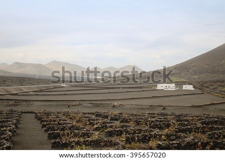 Authentic Canary Islands Farm