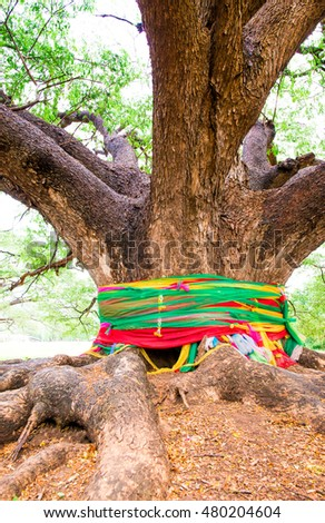 Auto Tone Of Roots Of An Old Tree, Tree With Big Roots,The Giant