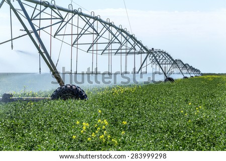 Automated Agricultural Irrigation sprinkler system in operation on processed agricultural field on a bright sunny summer day - stock photo