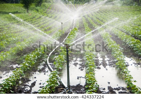 Automatic Sprinkler irrigation system watering in the cotton farm. Maharashtra, India - stock photo