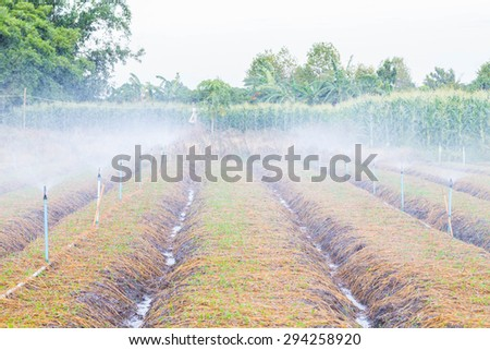 Automatic sprinkler irrigation system watering in the vegetable farm. - stock photo
