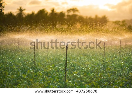 Automatic sprinkler irrigation system watering in the vegetable farm in morning-Selective focus.