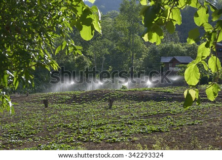 Automatic watering green fields in Thailand.  - stock photo