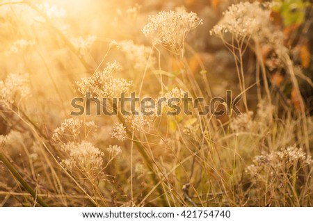 Autumn abstract background with meadow plant at sunset, vintage retro image