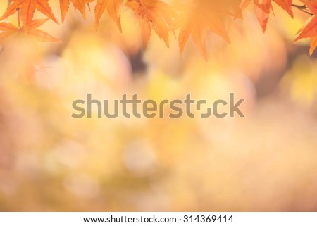 Autumn abstract  backgrounds [Soft focus]