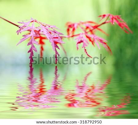Autumn, Acer, Water - stock photo