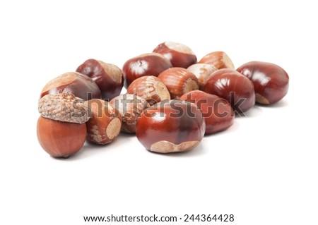 Autumn acorns and chestnuts on white - stock photo