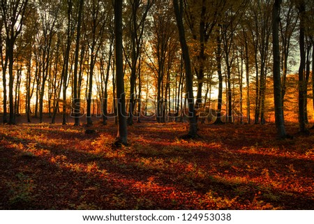 Autumn afternoon into the forest with the warm sun light coming through the trees - stock photo