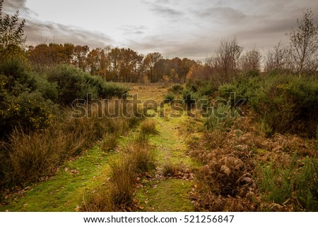 Autumn afternoon landscape on Chailey Common, Sussex, England.