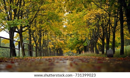 autumn alley background