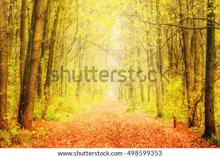 Autumn alley in park with yellow foliage on trees.