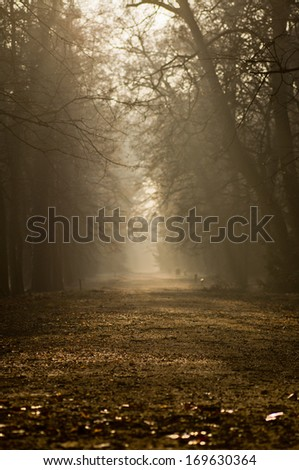 autumn alley in the park, foggy - stock photo