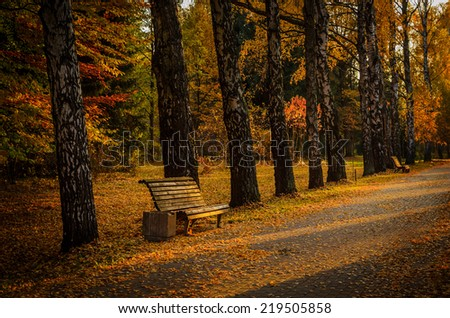 autumn alley of birches with bench