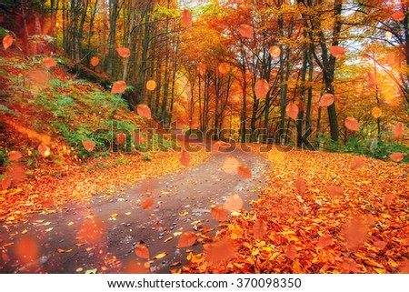 autumn alley. Sunlight breaks through the autumn leaves of trees. - stock photo