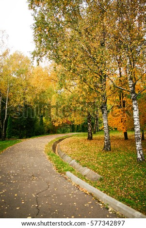 Autumn alley with birches