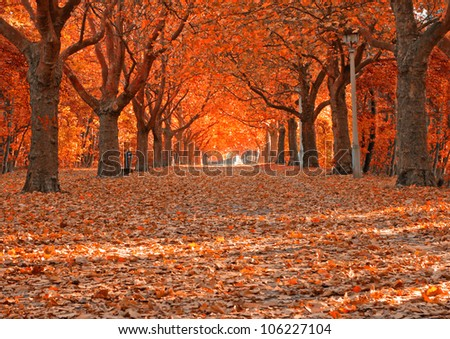 Autumn alley with red leaves - stock photo