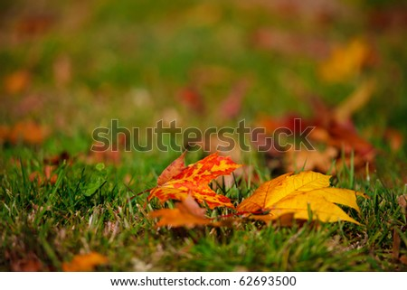 Autumn and glowing colorful leaves - stock photo