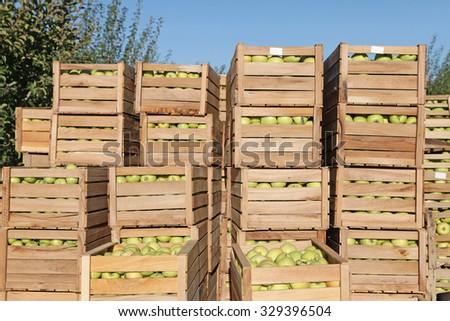 Autumn apple harvest in the garden - stock photo
