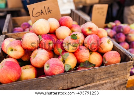Autumn Apple Varietals from the Farmer's Market