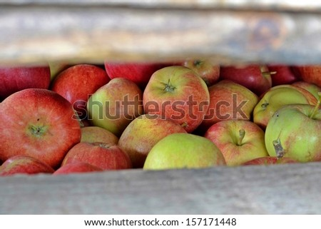 autumn apples in the wooden crates - stock photo