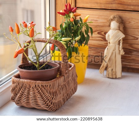 Autumn arrangement of peppers on the window - stock photo