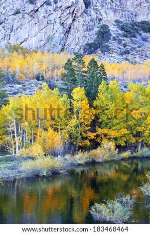 Autumn Aspen Trees beneath rugged granite, morning light, June Lake Loop, Sierra Nevada, California. - stock photo