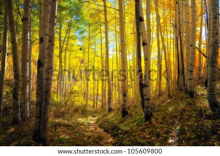 autumn aspens and the glow of the trail - stock photo