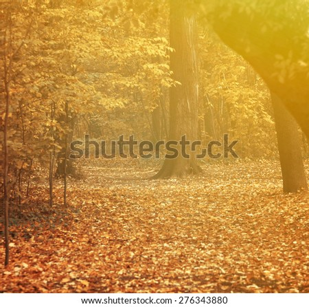 Autumn at forest - stock photo