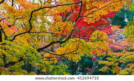 Autumn at Koto-in a Sub Temple of Daitokuji Temple in Kyoto, Japan   - stock photo