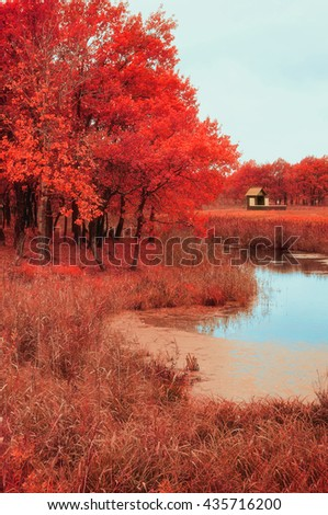 Autumn. Autumn cloudy landscape - small wooden house near the old oak autumn forest in foggy cloudy autumn weather. Autumn nature.Soft focus applied, picturesque autumn landscape view, autumn nature - stock photo
