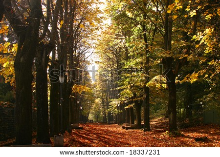 Autumn avenue - stock photo