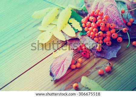 Autumn background/ Autumn leaves and berry  over wooden background/Thanksgiving day concept       - stock photo